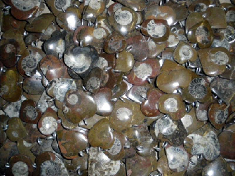 Ammonites, heart shape, pendant. 100 pieces.