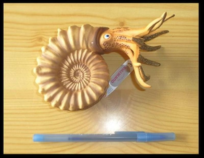 "Ammonite ""Pleuroceras"" replica made in Germany by Bullyland, 1 piece"