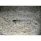 Rhodizite, loose crystals, Madagascar, 100 g