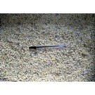 Rhodizite, loose crystals, Madagascar, 10 kg
