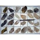 Amethyst etc. - sceleton X/xx, Brandberg, Namibia, 1 flat with 24 pieces