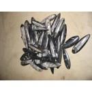 Orthoceras, 6 cm, polished, Morocco, 100 pieces