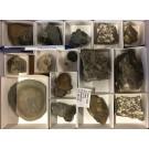 "Ammonite ""Pleuroceras"" etc., Lias, Buttenheim, Unterstürmig, Germany, 1 flat"