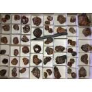 Spessartite, Garnet, crystals medium size, Tanzania