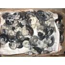 Goniatites, Morocco, polished both sides, 6 cm, 1 piece