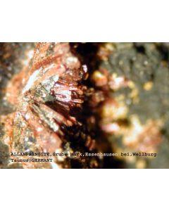 Allanpringite (xx); Grube Mark, Taunus, D.; MM