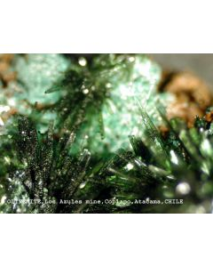 Olivenite xx; Mina El Guanaco, East Catalina, Taltal, II-Region, Atacama Desert, Chile; KS