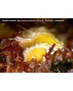 Uranophane xx; Menzenschwand, Schwarzwald, D; MM