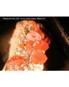 Vanadinite xx; Mibladen, Midelt, Morocco; MM