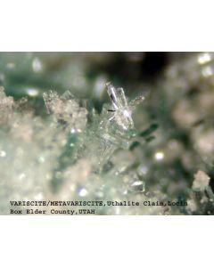 Variscite xx; Utah Lite Claim, Lucin, UT, USA; MM