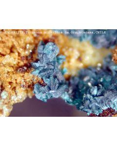 Zalesiite xx; Inca de Oro, Chile; NS