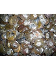 Ammonites, round, with hole for pendant, 100 pieces
