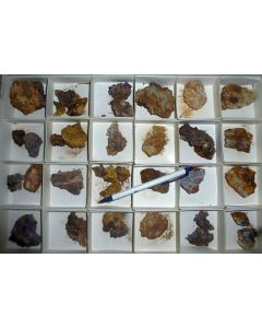 Silver, nat. xls + Anglesite xls, Lavaderos Mine, Mexico. 1 flat, 54 specimens.