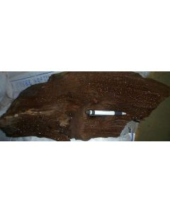 Petrified wood with quartz xls, Schwenkau, Saxony, Germany, 100 kg