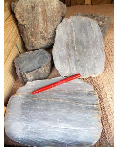 Petrified wood, cut or rough, Zeithain, Saxony, Germany, 1 kg