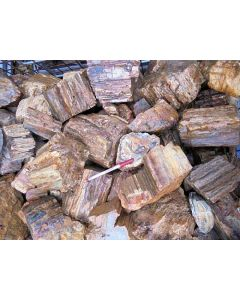 Petrified wood, smaller pieces, Madagascar, 1 kg