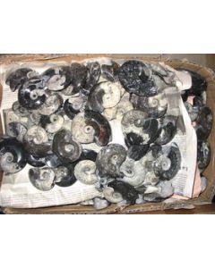 Goniatites, polished both sides, app. 6 cm, Morocco, 1 piece